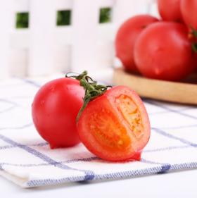 春桃柿子新鲜现摘小西红柿孕妇水果美白抗氧化