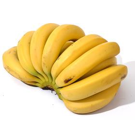 广西热带香蕉 精选3斤装 水果农家当季芭蕉帝王皇帝蕉粉蕉-835018