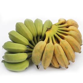 海南新鲜芭蕉3斤 香甜软糯新鲜水果-835020