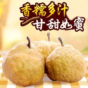 烟台丑梨 精选3斤装 甘甜啤梨宝宝水果新鲜软梨子-835059
