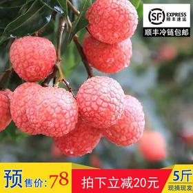 高州水果新鲜荔枝 现摘现发白糖罂荔枝5斤顺丰包邮 非妃子笑桂味