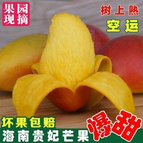 树上熟贵妃芒果   海南热带水果 新鲜包邮坏果包赔