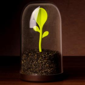泰国Qualy创意绿芽茶叶罐 调料盒 调味罐 咖啡罐密封罐干果储物罐