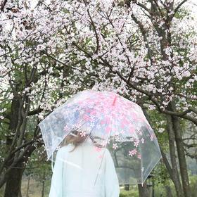 小清新简约樱花透明雨伞