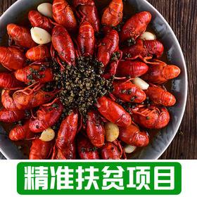 【凡桥村】清水鲜活小龙虾3斤送半斤