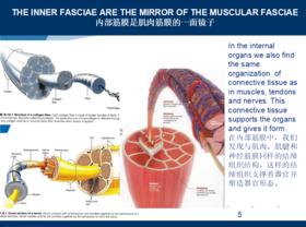 【广州Level 3 Pasini/Pina】2019年11月3日~11月9日意大利FM筋膜手法证书认证课程