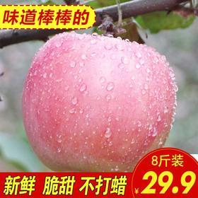 山西运城红富士苹果净重8斤包邮新鲜脆甜原生态水果孕妇带皮吃的苹果