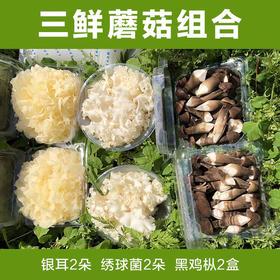 【福建特产】三鲜蘑菇组合 古田新鲜银耳+绣球菌+黑鸡枞 顺丰全国包邮