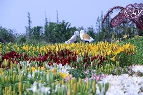 【嗨爆苏州】全城沸腾!苏州太湖园博狂欢节,特价来袭