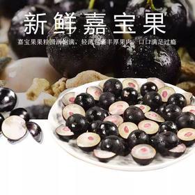 【台湾水果】新鲜嘉宝果 树葡萄 优质时令水果 孕妇果 稀有水果 营养极其丰富