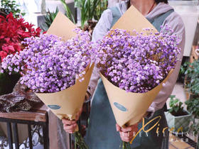 新鲜紫色进口满天星(到店可搭配点其他色)