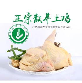 【无公害散养农家老母鸡】一年以上 现逮现处理 肉质鲜美 净重1.8-2.4斤  顺丰