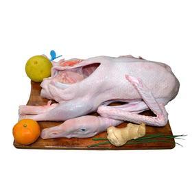 【无公害散养苏北老鹅】一年以上 净重5.5斤-6.5斤 新鲜现杀肉质鲜美  顺丰