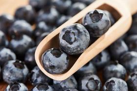 口感清甜 糖度高的新鲜大蓝莓甜蜜来袭 果大形正 含糖量12度以上