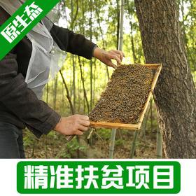 【新庙村】野生蜂蜜1Kg