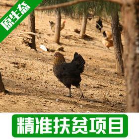 【母婴食品】农家散养土鸡4斤左右现杀
