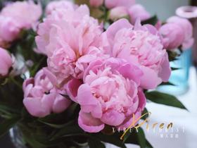重瓣粉色芍药