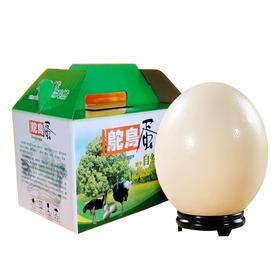 御农优品 非洲鸵鸟蛋 超大蛋 营养美味 3斤左右一个