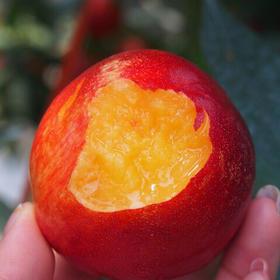 下单48小时发货 黄肉油桃 精选大果 2个规格