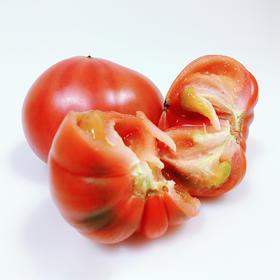 有味番茄 | 日本农业达人归国种植,非转基因有味番茄/西红柿/黄金果/极客农场