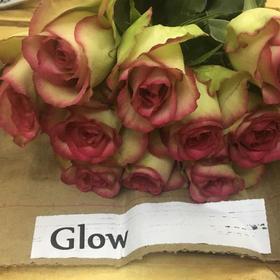【菲集】埃塞俄比亚农场直供 玫瑰花 Glow 进口鲜花 鲜切花
