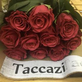 【菲集】埃塞俄比亚农场直供 玫瑰花 Taccazi 进口鲜花 鲜切花