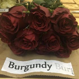 【菲集】埃塞俄比亚农场直供 玫瑰花 Burgundy 进口鲜花 鲜切花