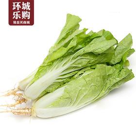 小白菜一份1kg左右-517810 | 基础商品
