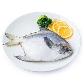 原膳东海鲳鱼250g(1条装) 冰冻海鲜 东海特产 海鲜水产