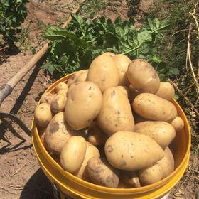 【香糯可口 高山土豆】大凉山彝族土著原生态种植土豆  来自高海拔深山的健康美食吃出美味健康8斤