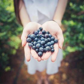 线下蓝莓园采摘门票专拍!