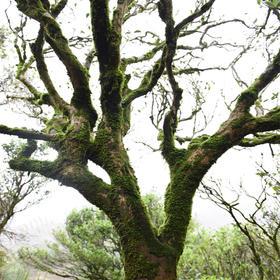沈爷的宝贝 林贞标单株纯料古树单丛  350年古树 一棵树一桶茶 凤凰单丛乌岽湖