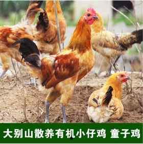 有机仔鸡童子鸡冷鲜包装包邮 需要提前预定,每周一周四发货