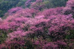 【预约】太平森林公园