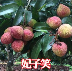 农家新鲜妃子笑荔枝5斤装 现摘现发农家孕妇水果