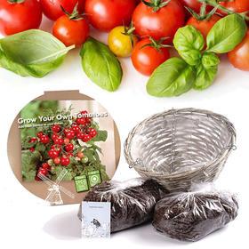 阳台盆栽种植系列,荷兰进口番茄吊篮、辣椒、迷你向日葵等种植套装可选,种子、土壤、肥料等全配!