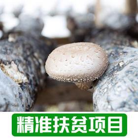 【雅谷山】农家香菇500g
