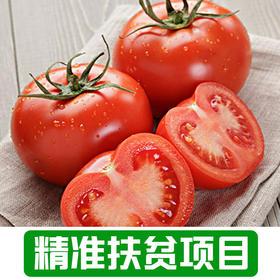【新庙村】农家番茄1Kg