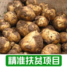 【新庙村】农家土豆1Kg
