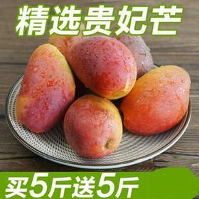 海南贵妃芒果新鲜当季水果红金龙中果10斤整箱包邮