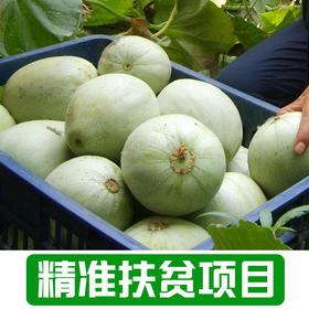 【雅谷山】农家香瓜1.5Kg