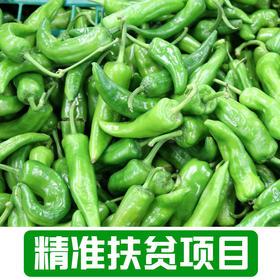 【后营村】农家青椒1.5Kg