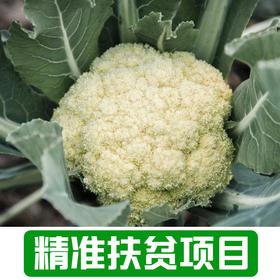 【后营村】农家花菜2.5Kg