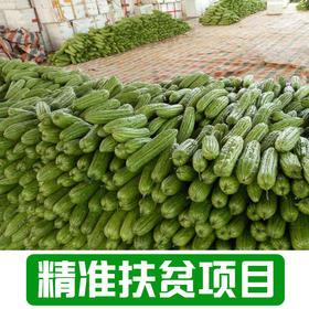 【后营村】农家苦瓜2.5Kg