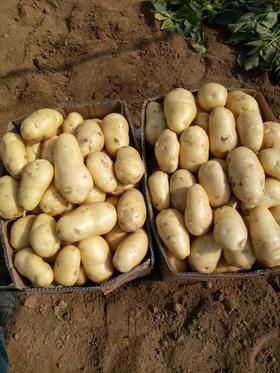 新蔬菜土豆农家自种马铃薯 2500g