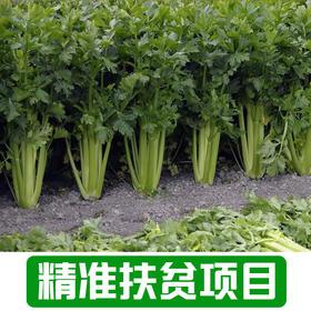 【雅谷山】农家芹菜2Kg