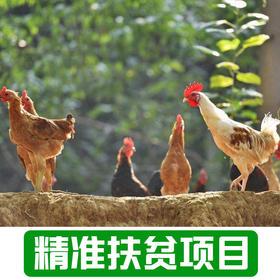 【后营村】农家散养土鸡4斤左右现杀