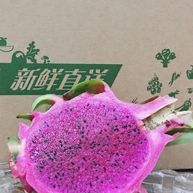 【拍前请看温馨提示】红心火龙果 2个 (1.6-1.8斤)