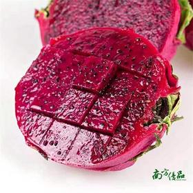 【爆款美味】广西金都一号红肉火龙果 一个(每个约450-550g)【拍前请看温馨提示】