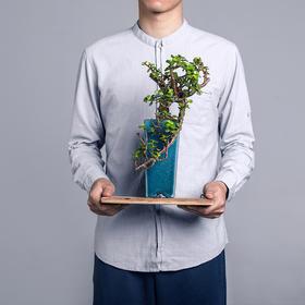 绿居植物金枝玉叶造型盆景盆栽 室内绿植花卉办公室植物送礼礼品
